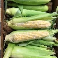 Online Farm Stand for July 22 & 23, 2020