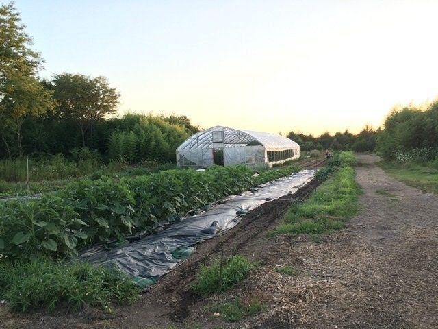 Farm Happenings for July 24, 2020