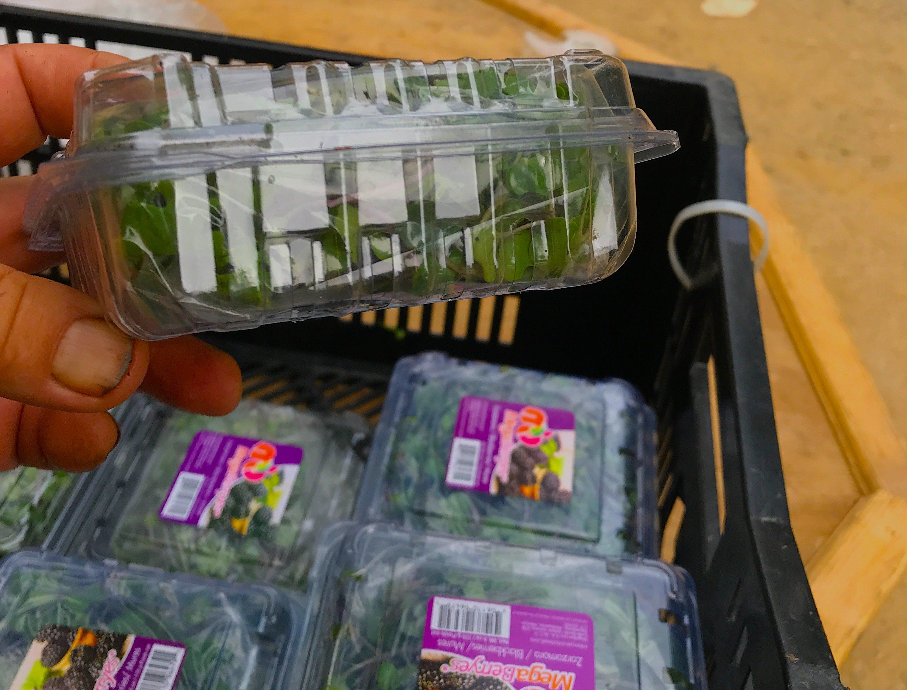 Next Happening: Week 10: Farewell to Leafy Greens, Hello Micro-Greens
