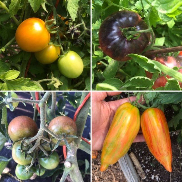 Farm Happenings for August 6, 2020