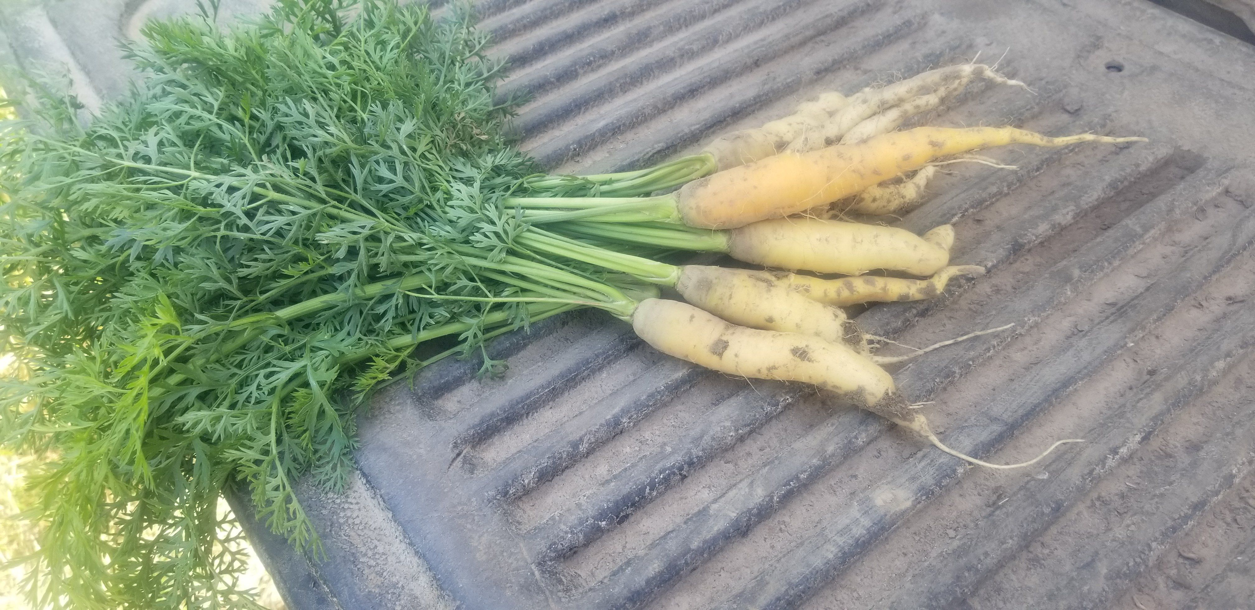 Farm Happenings for the week of August 8, 2020