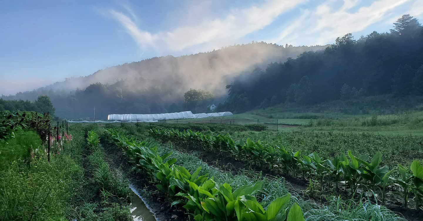 Next Happening: Farm Happenings for August 11, 2020