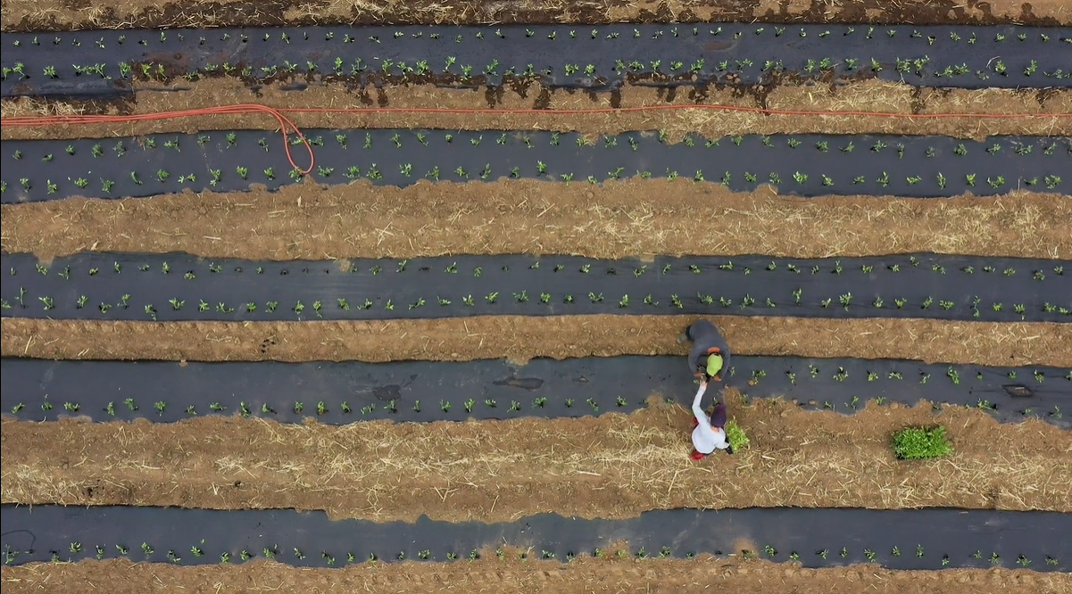 Farming During COVID-19