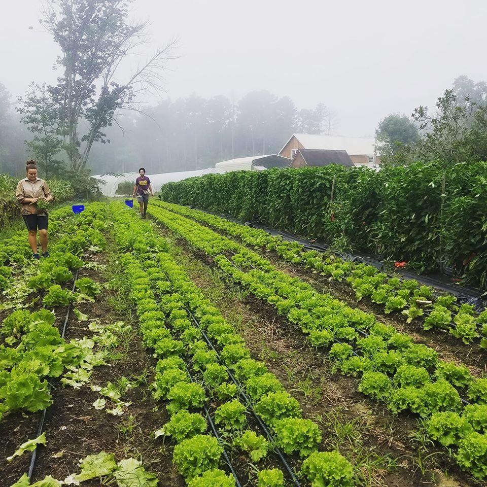 Farm Happenings for August 15, 2020