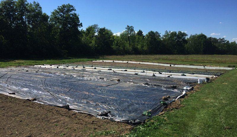 Farm Happenings for August 19, 2020