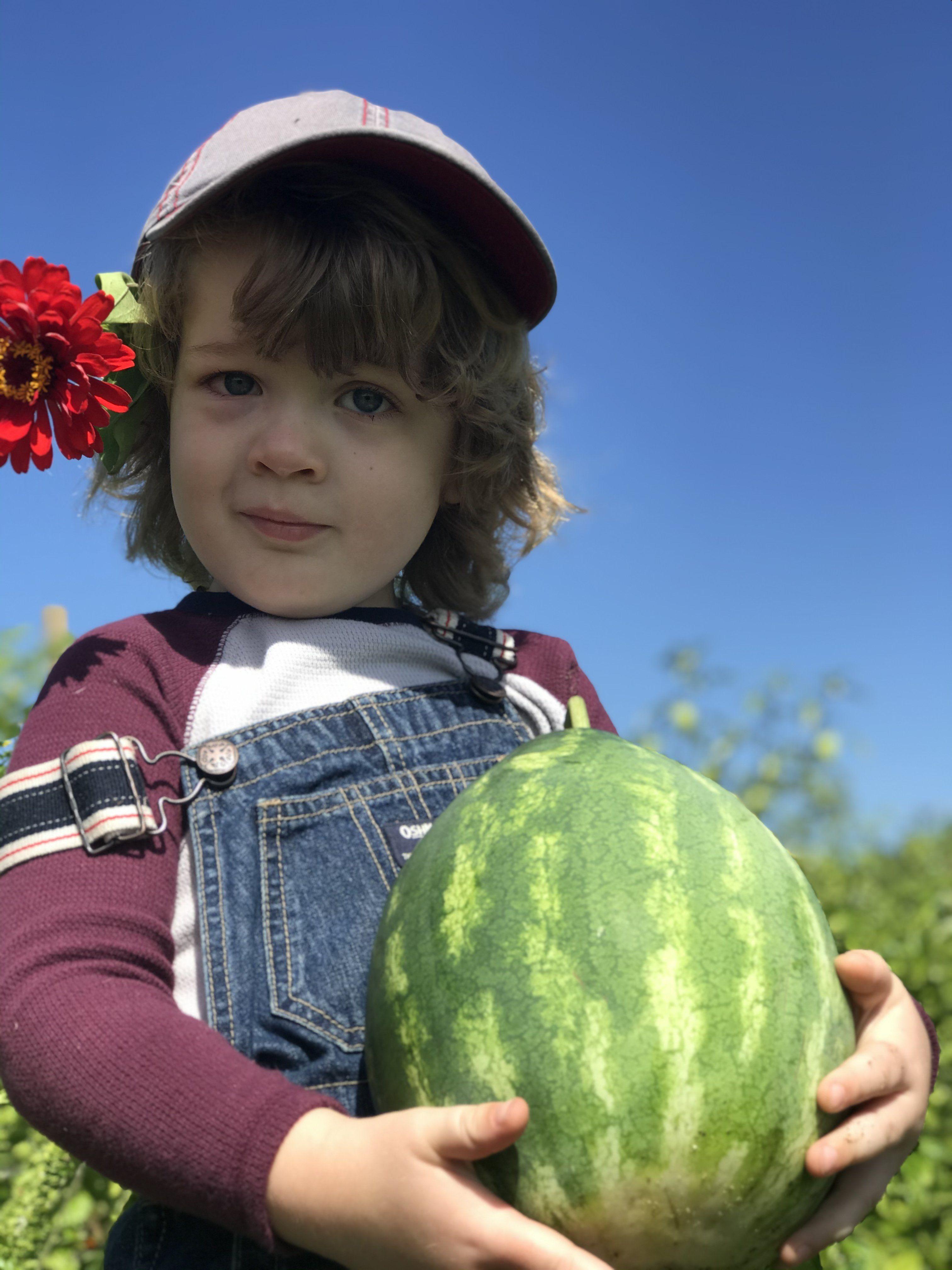 Peak Summer Harvest