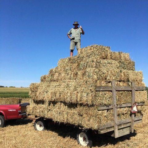 Previous Happening: Hay, Man