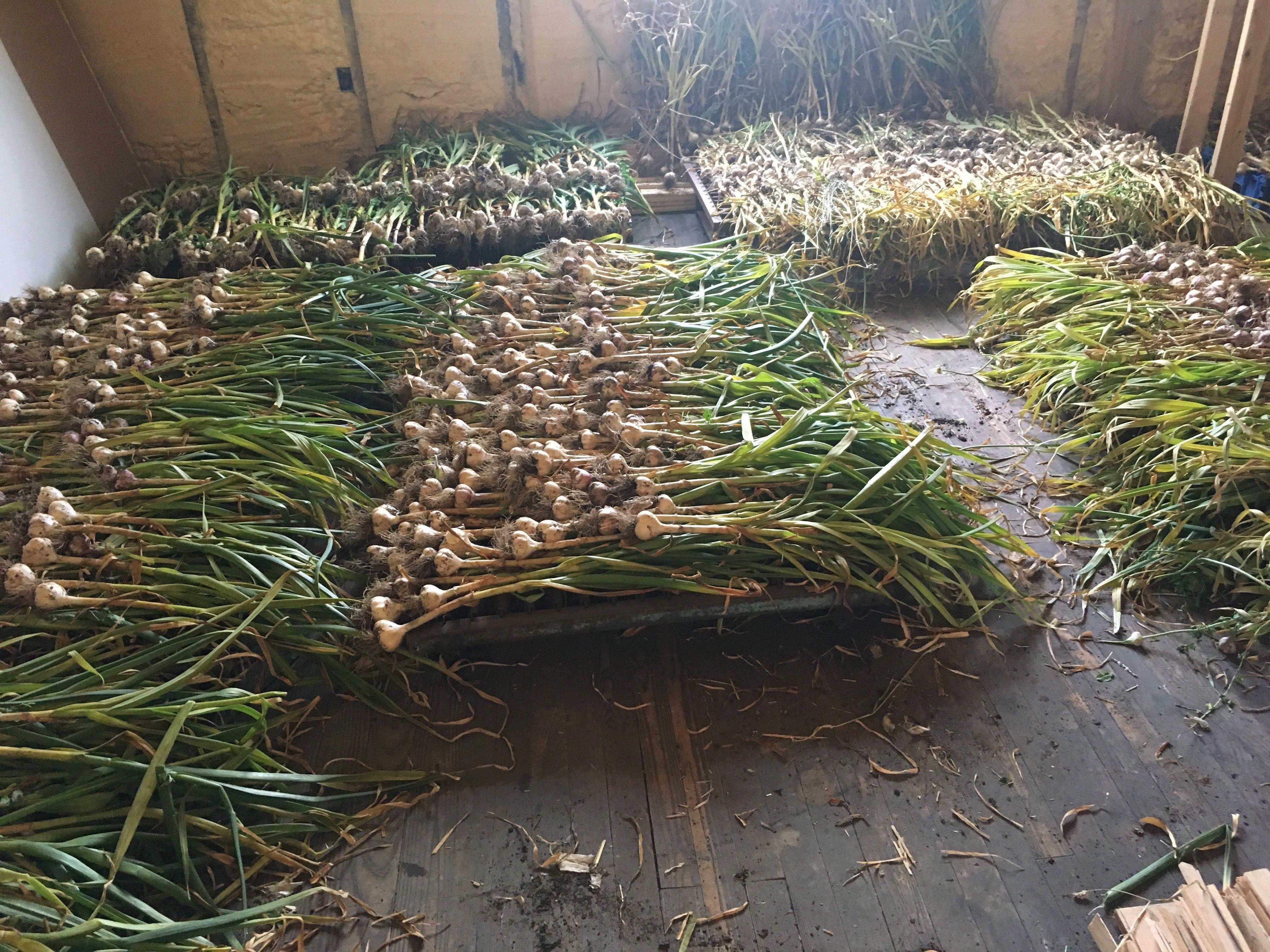 Common Roots Urban Farm CSA Newsletter #13