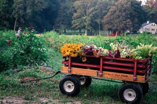 Previous Happening: Oxen Hill Farm Summer 2020 CSA Season Week 12! (week of September 7)