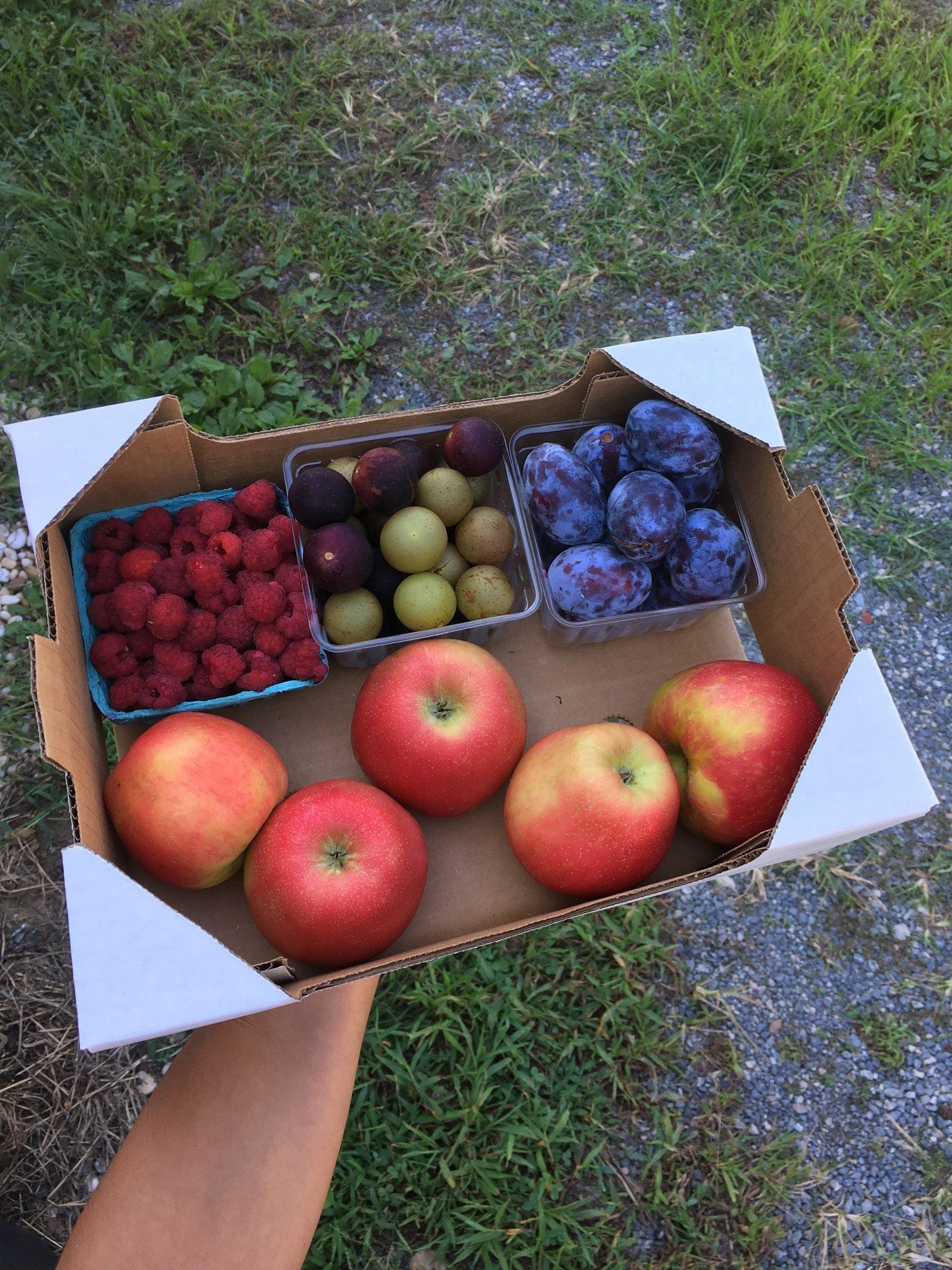 Previous Happening: Final week of the Summer Farm Share. Next week begins the Fall Farm Share