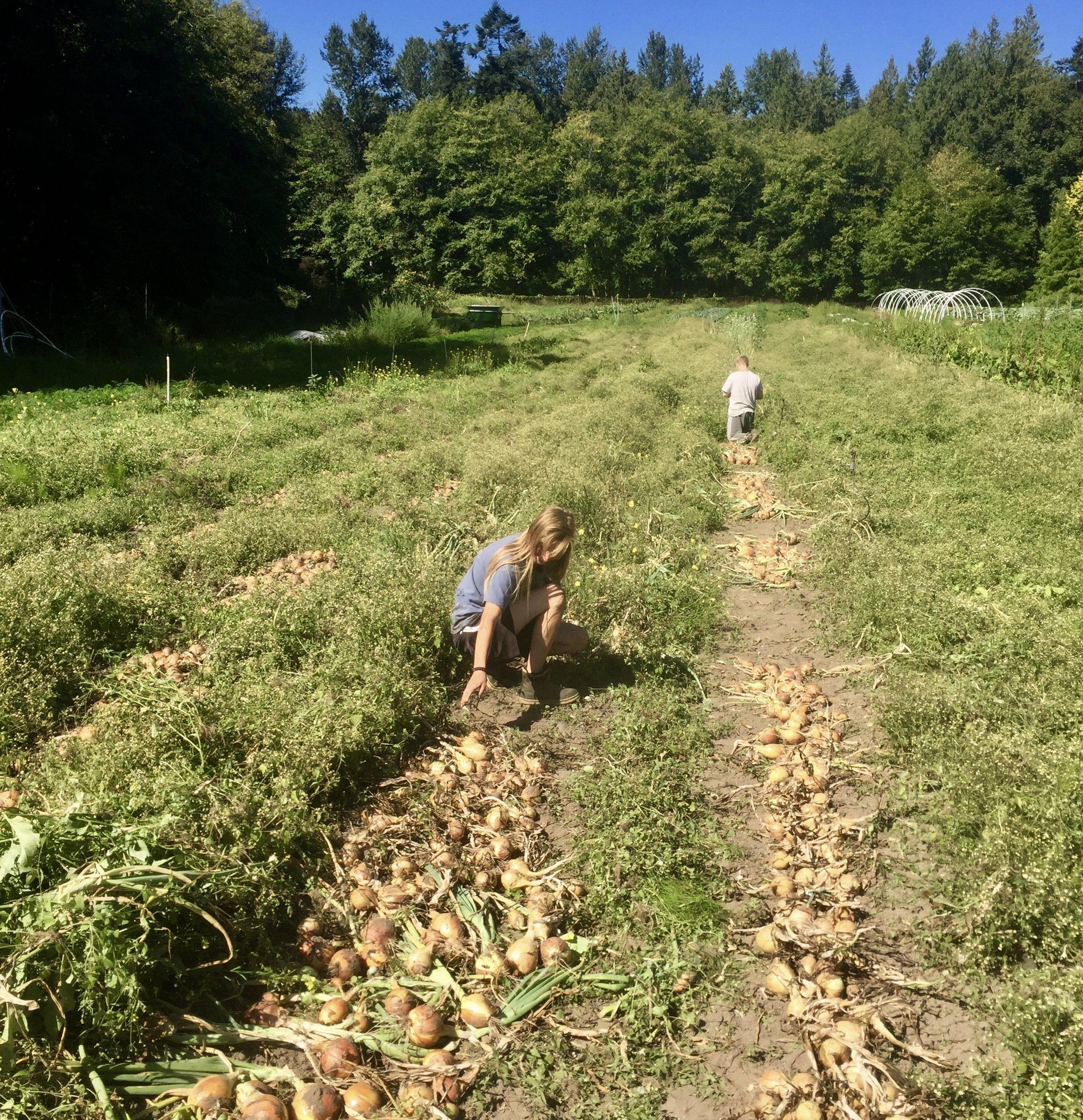 Previous Happening: Farm Happenings for September 9, 2020
