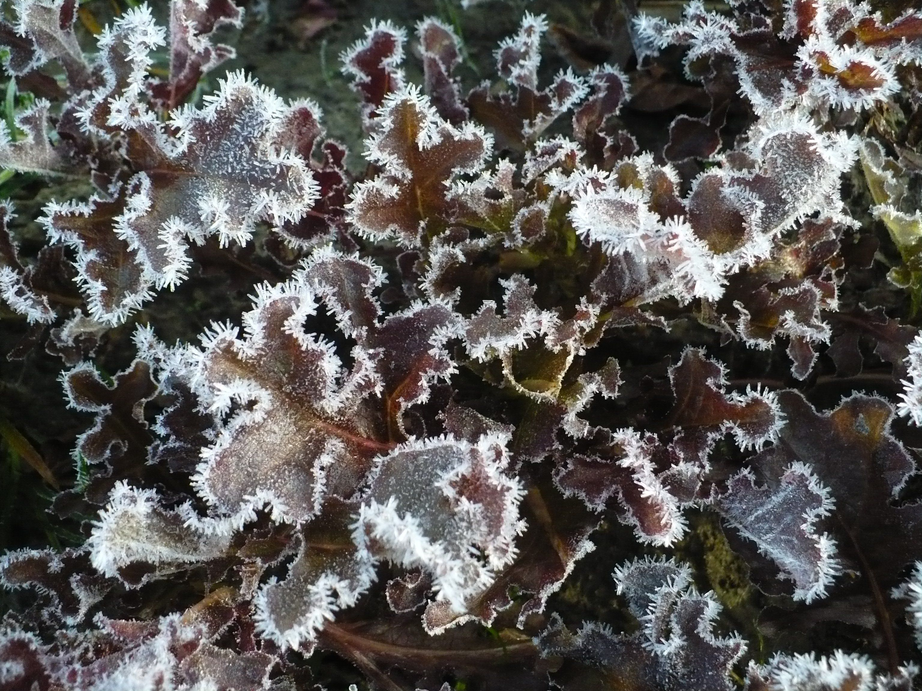 Next Happening: Early Frost