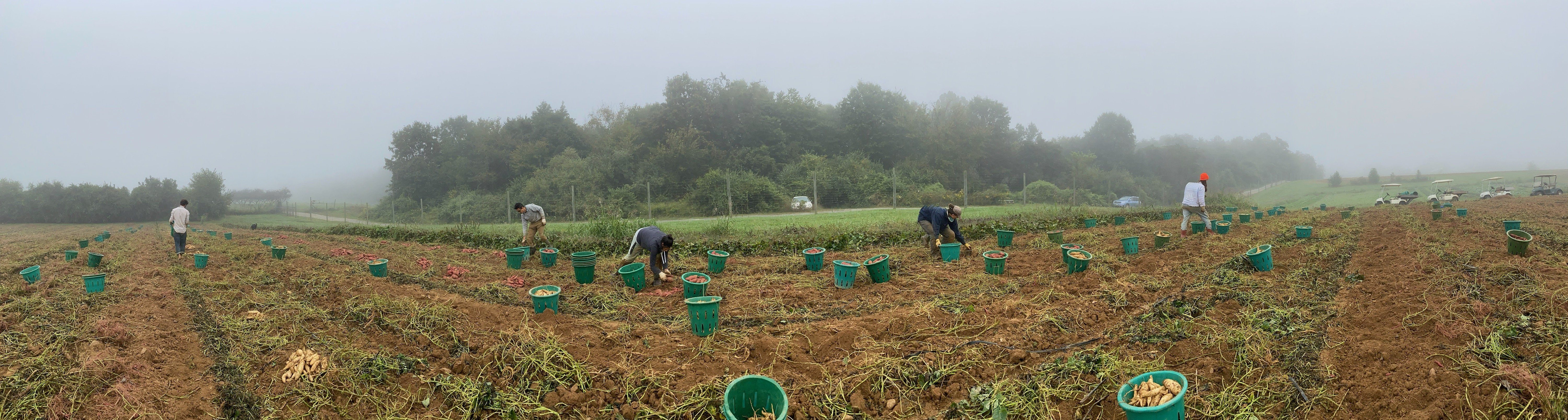 Autumn CSA Week 3:  Cover Crop is In!