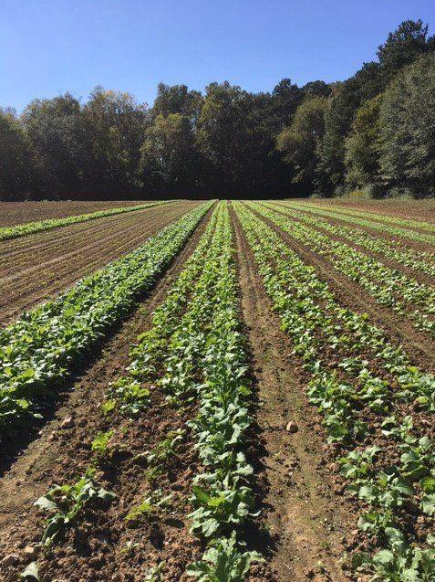 Farm Happenings for October 6, 2020