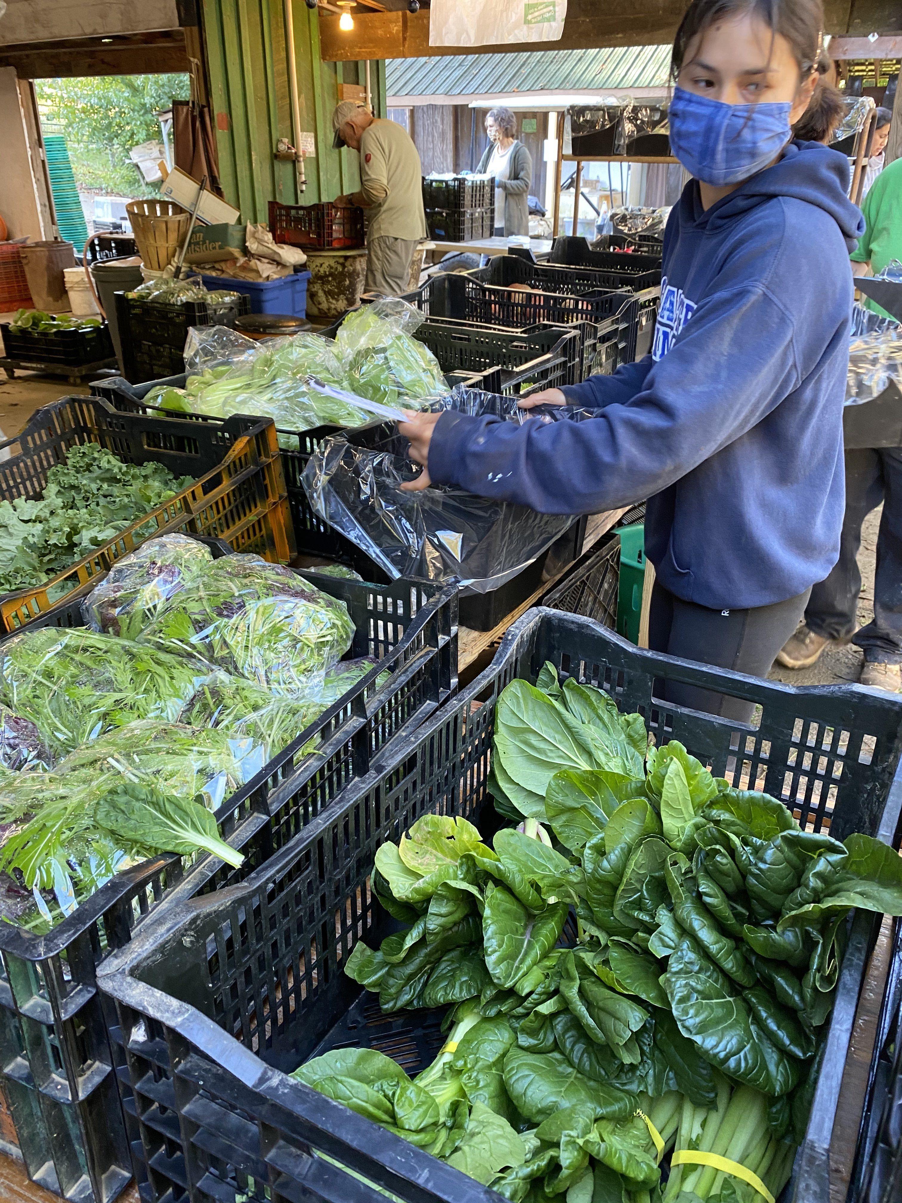Autumn CSA Week 4: High Season for Brassicas
