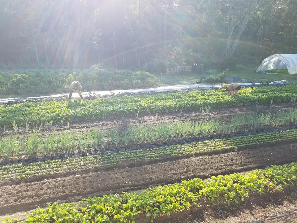 Next Happening: Farm Happenings for October 14, 2020