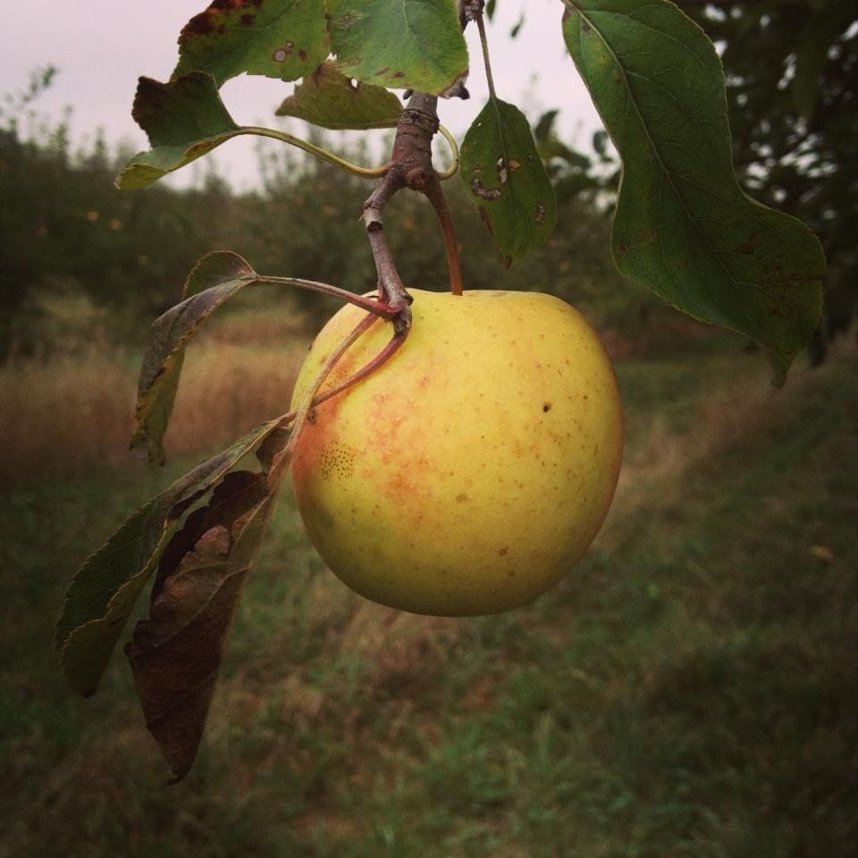 Previous Happening: Apples and pumpkins, oh my!