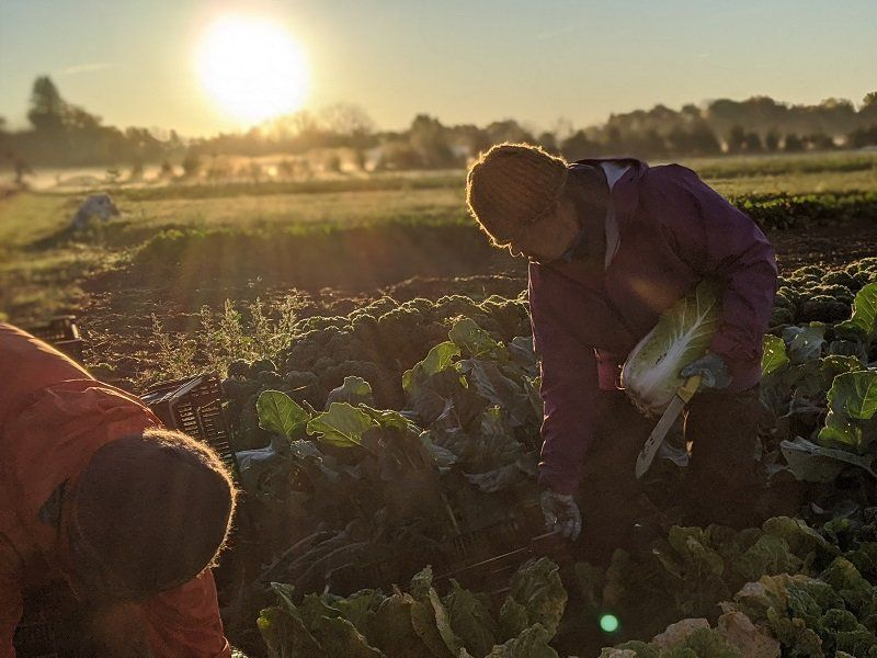 Farm Happenings for October 22, 2020