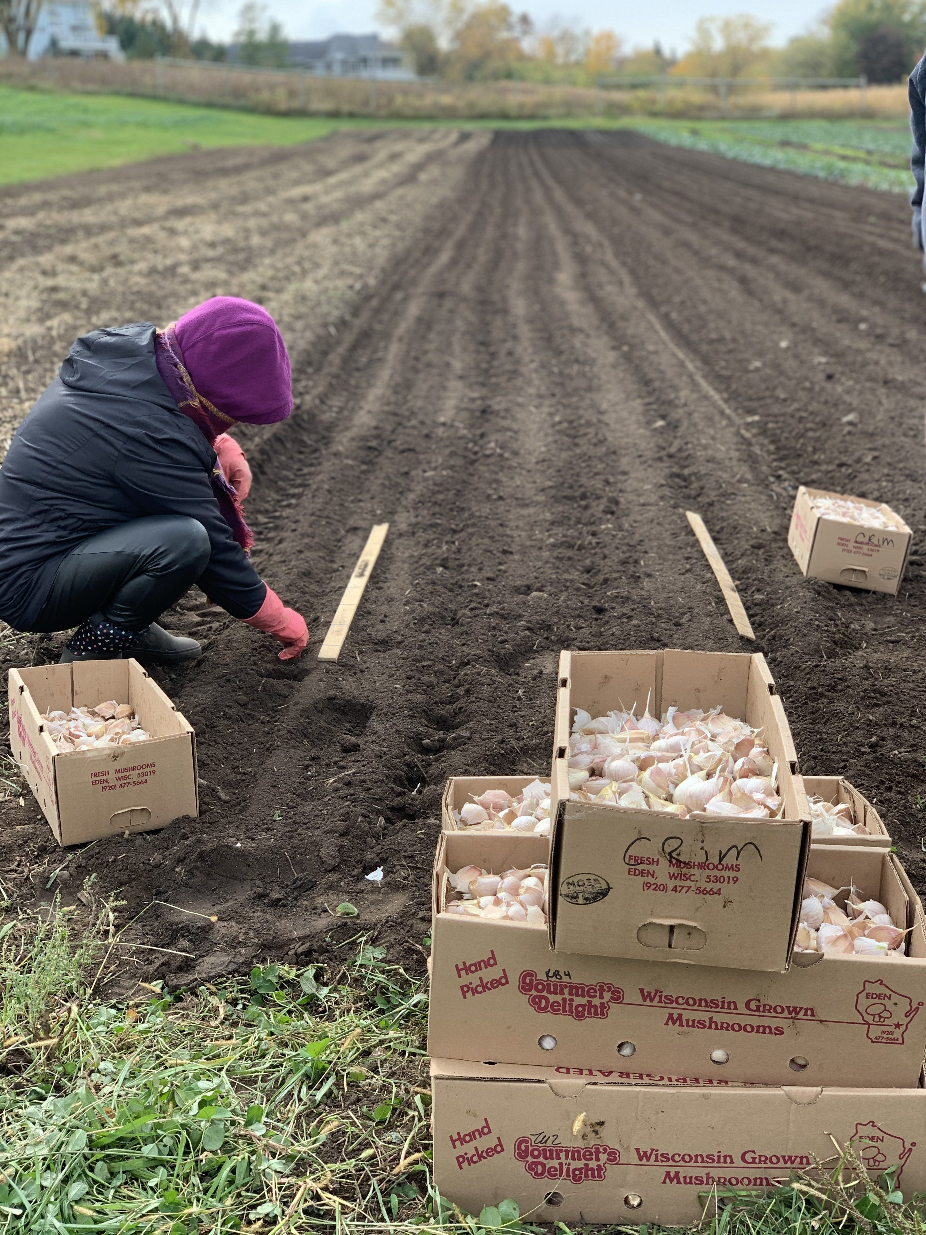 Planting for a Brighter Future
