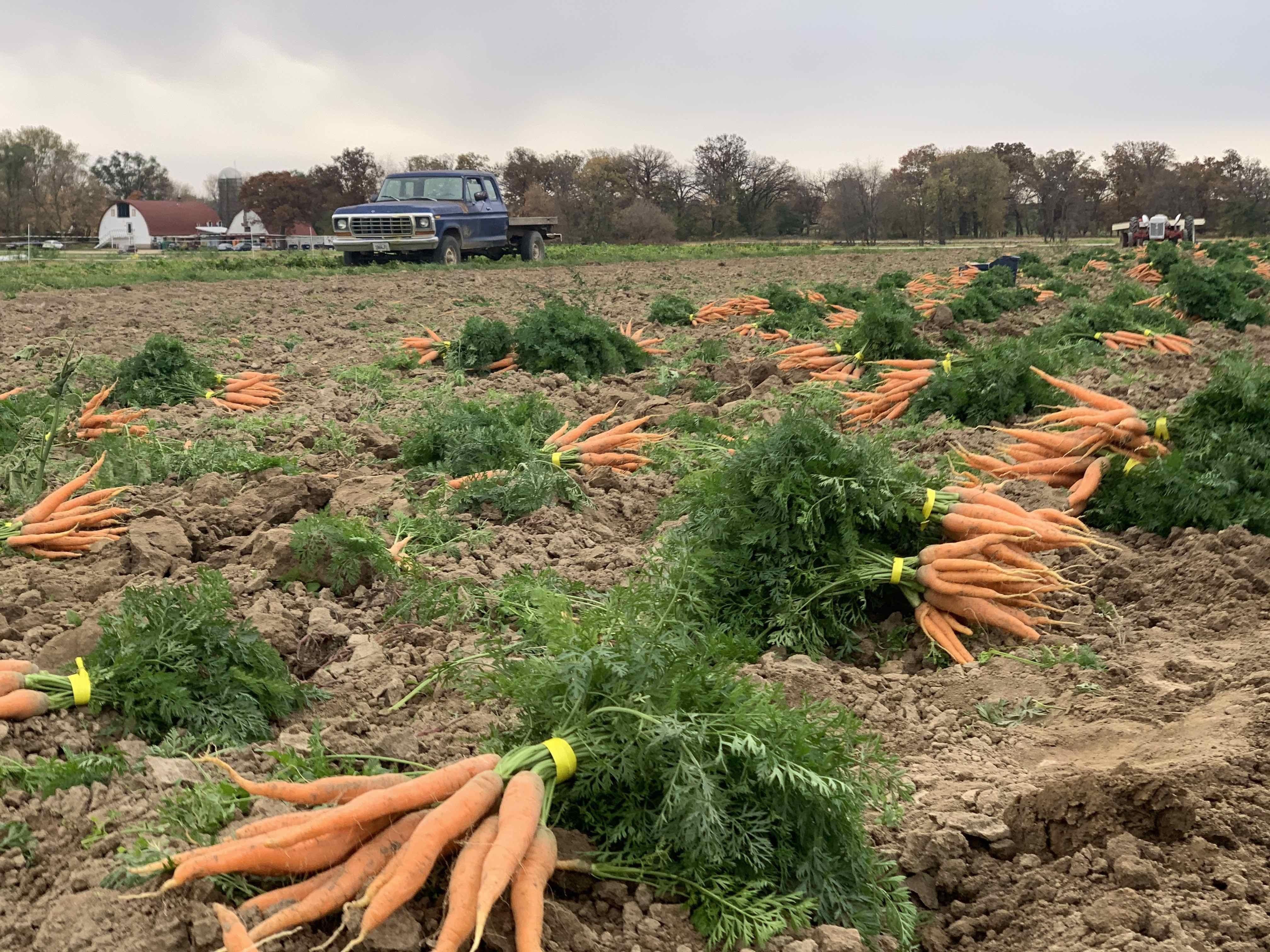 Next Happening: Week 19 Farm News Coming Soon