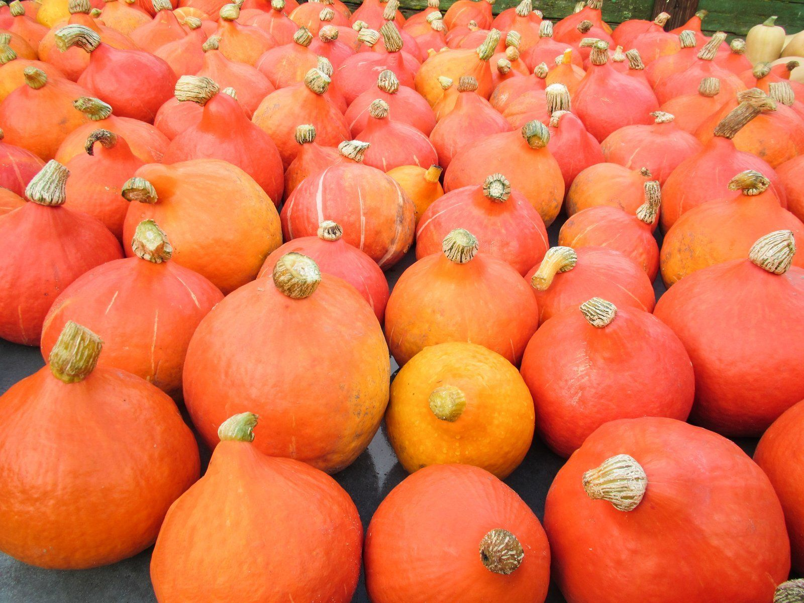 Red Kuri Winter Squash and Ribeye Steaks Available The Week!