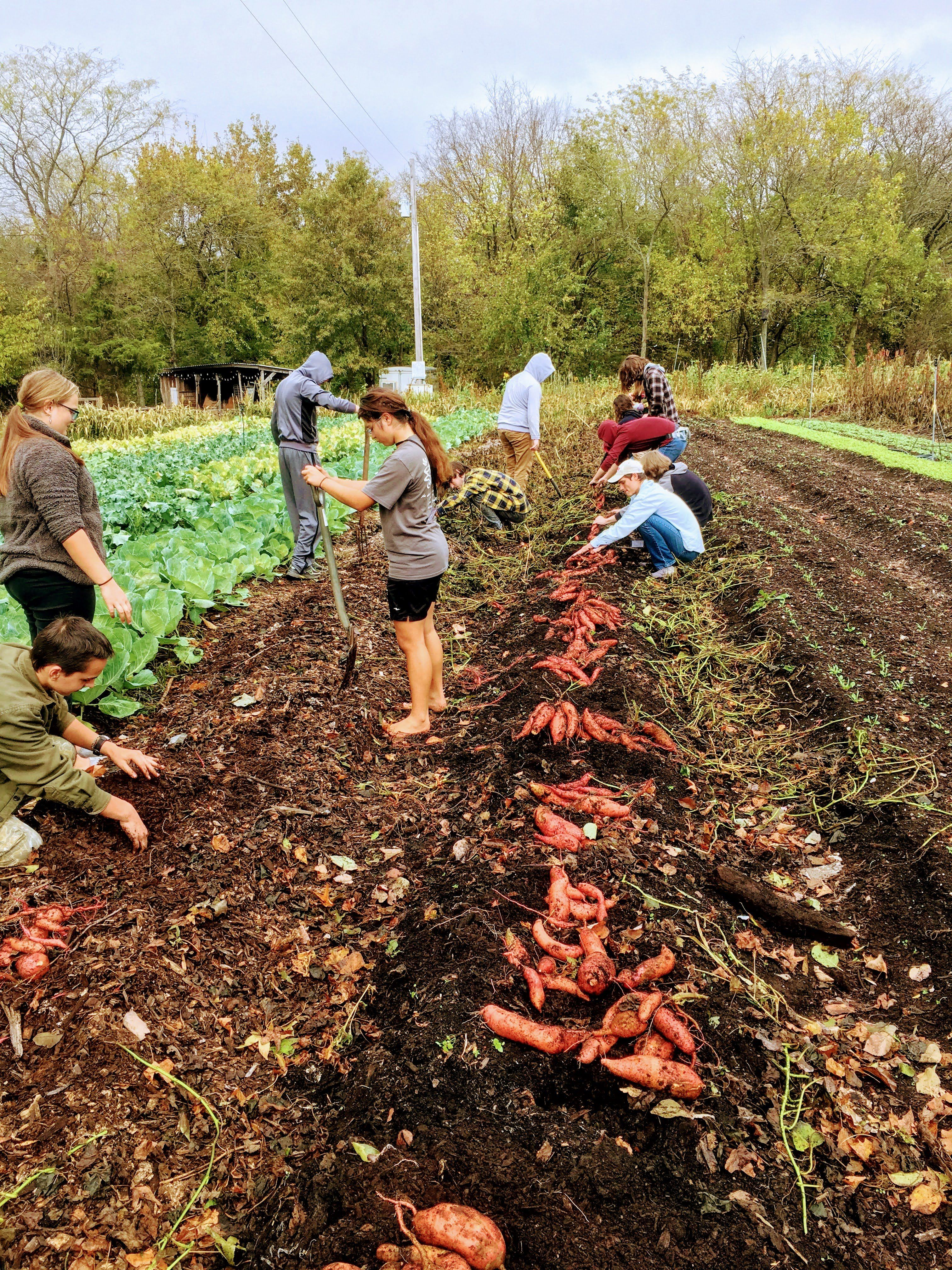 Fall shares are starting this week! Farm Happenings for October 30, 2020