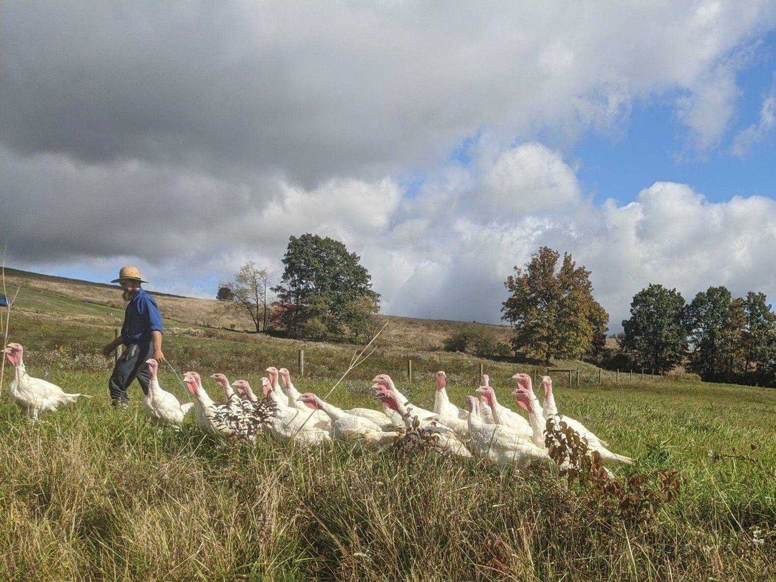 Farm Happenings for week of November 10, 2020