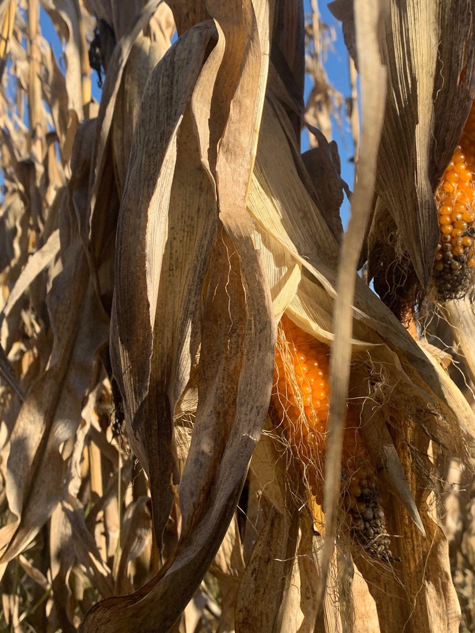 Farmer John Writes: Still Growing