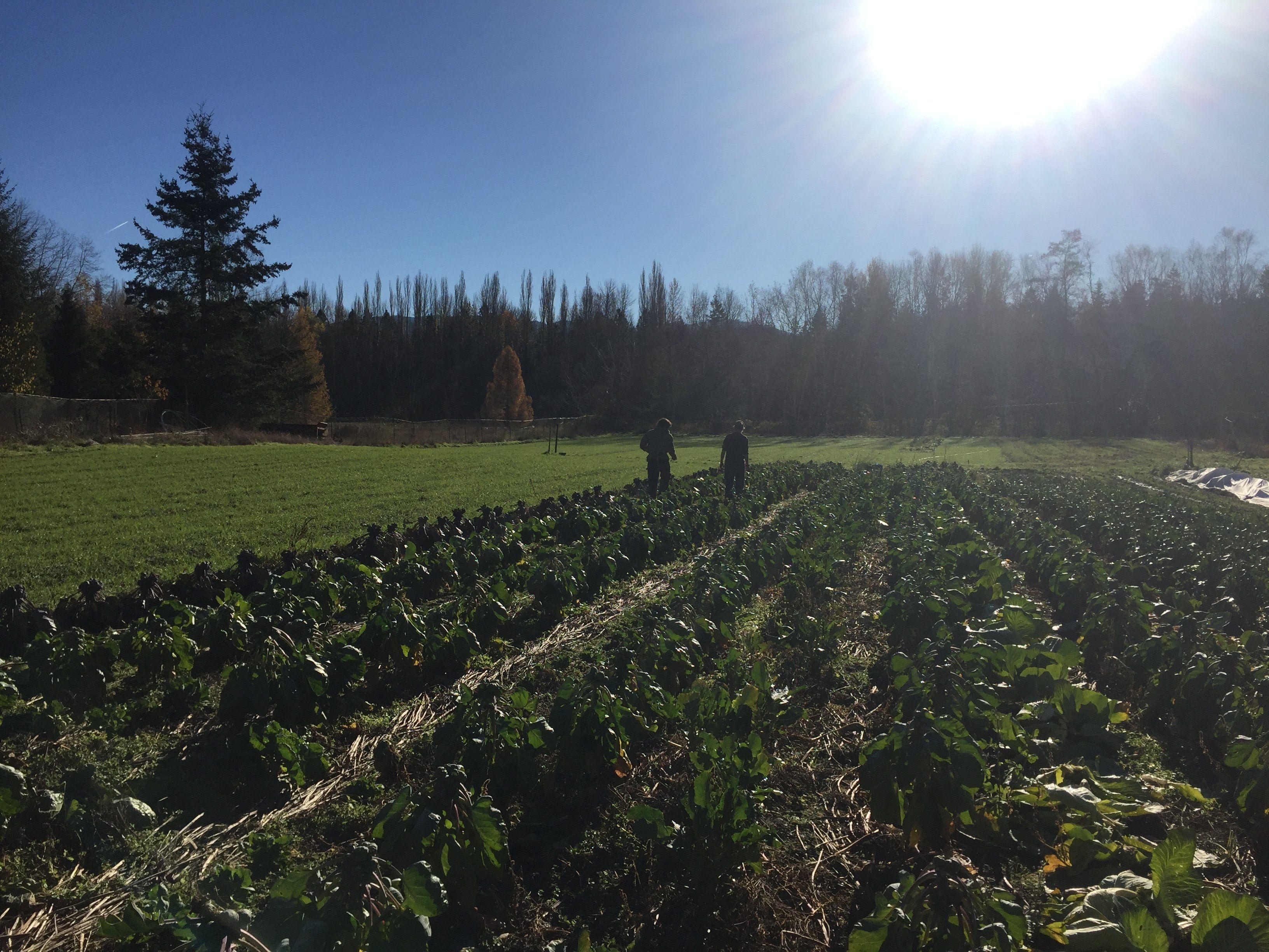 Farm Happenings for November 11, 2020
