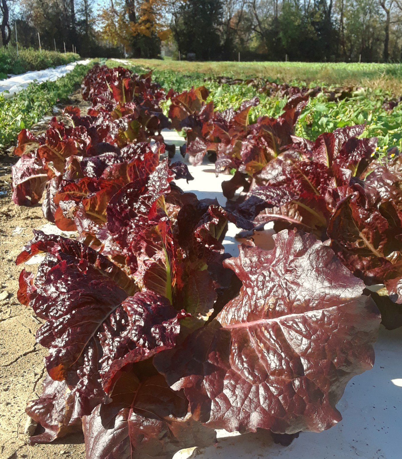 Farm happenings for Week of November 9th
