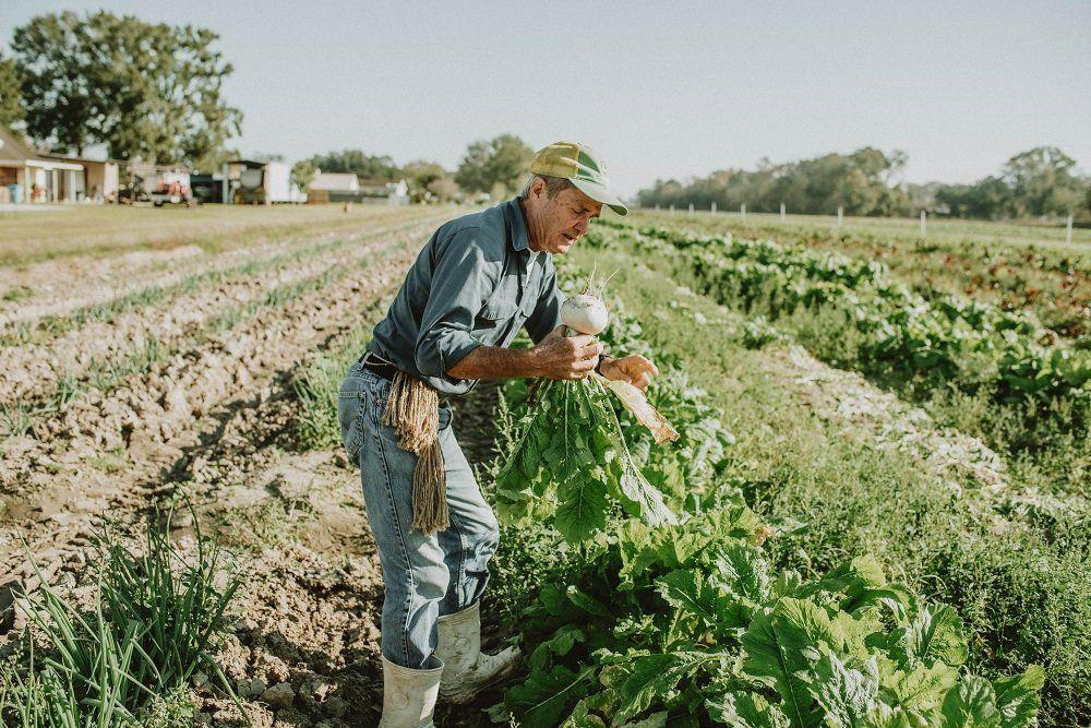 Harvie Farms New Orleans week 2