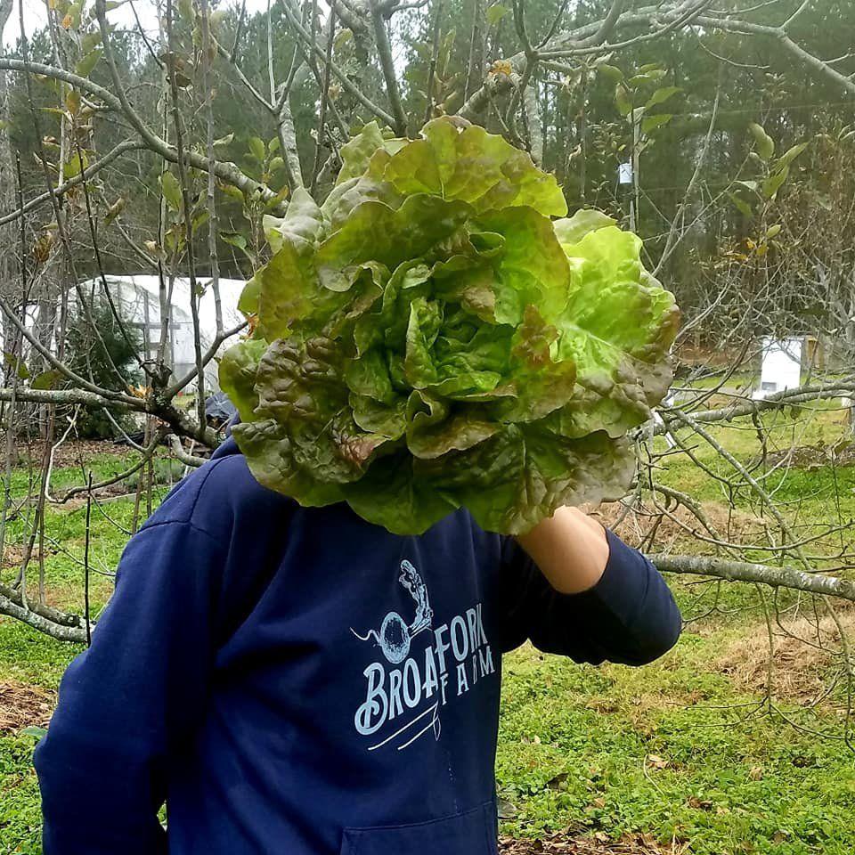 Farm Happenings for December 10, 2020