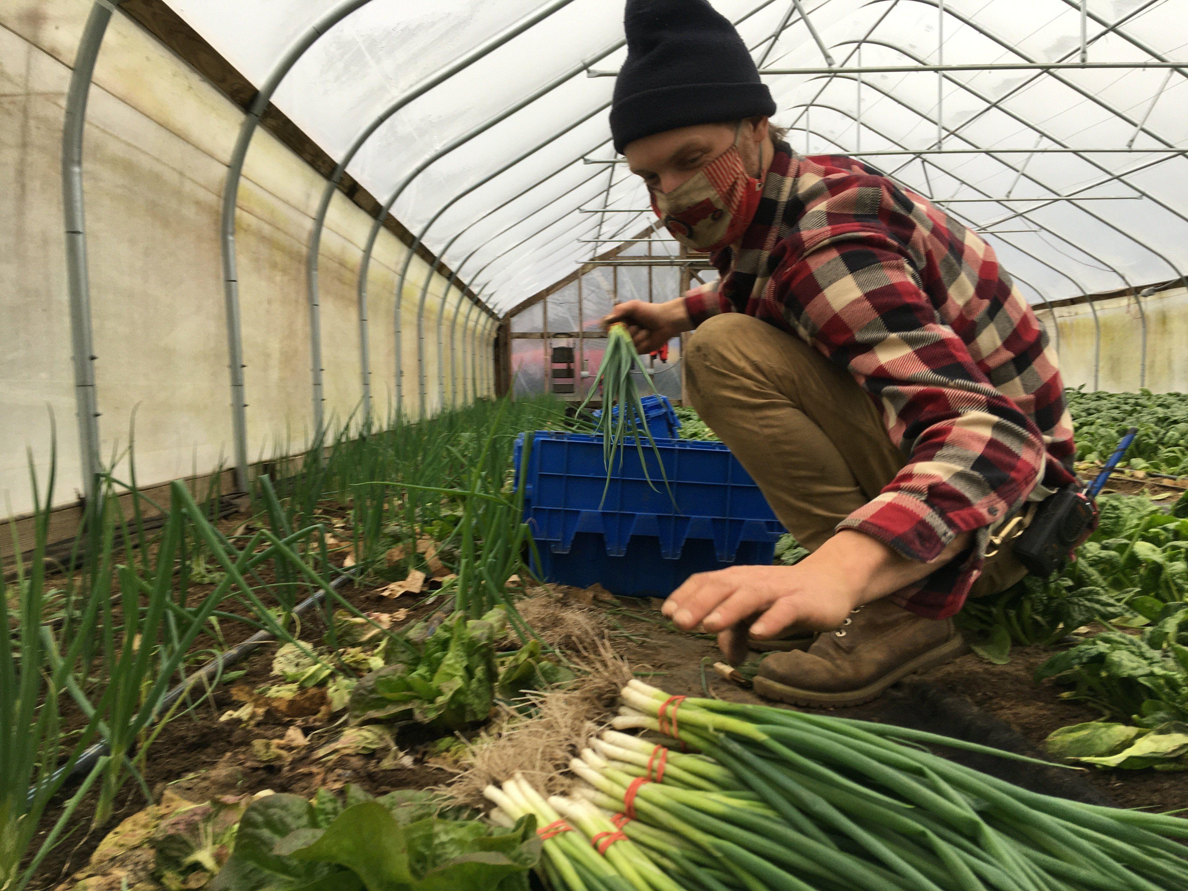 Previous Happening: December Harvest