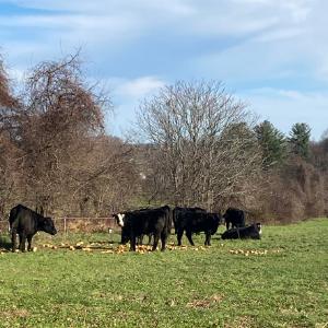 Farm Happenings for Week of December 14, 2020