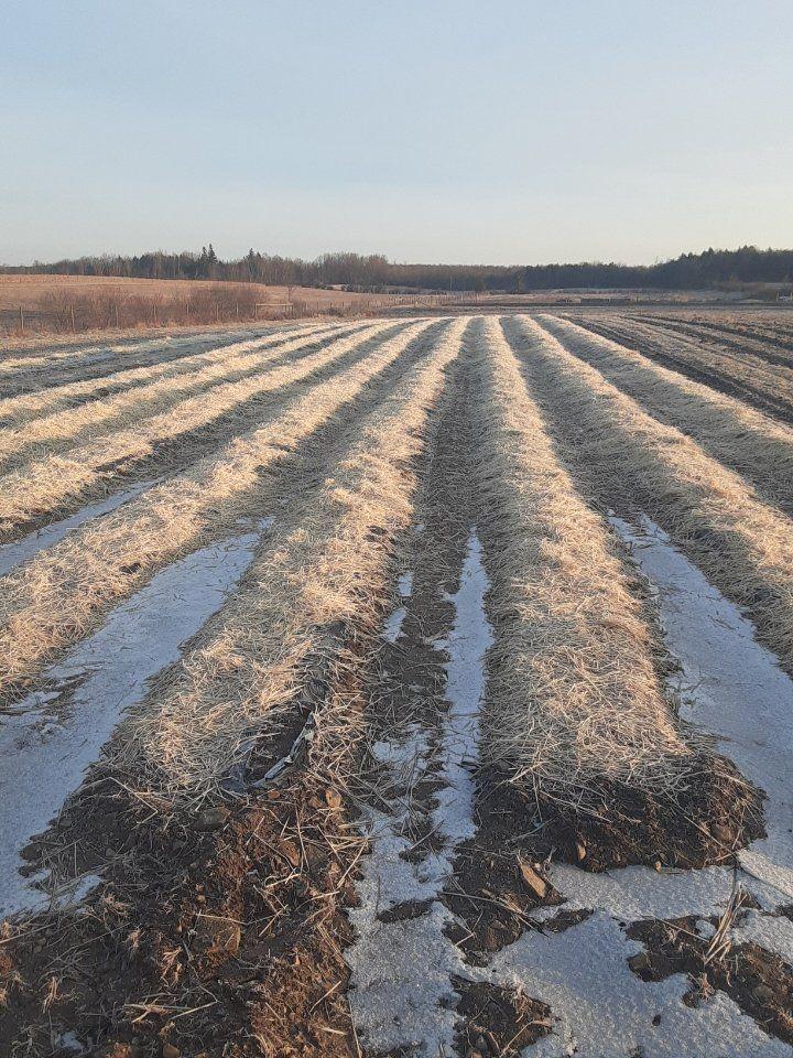 Farm Happenings for December 17, 2020