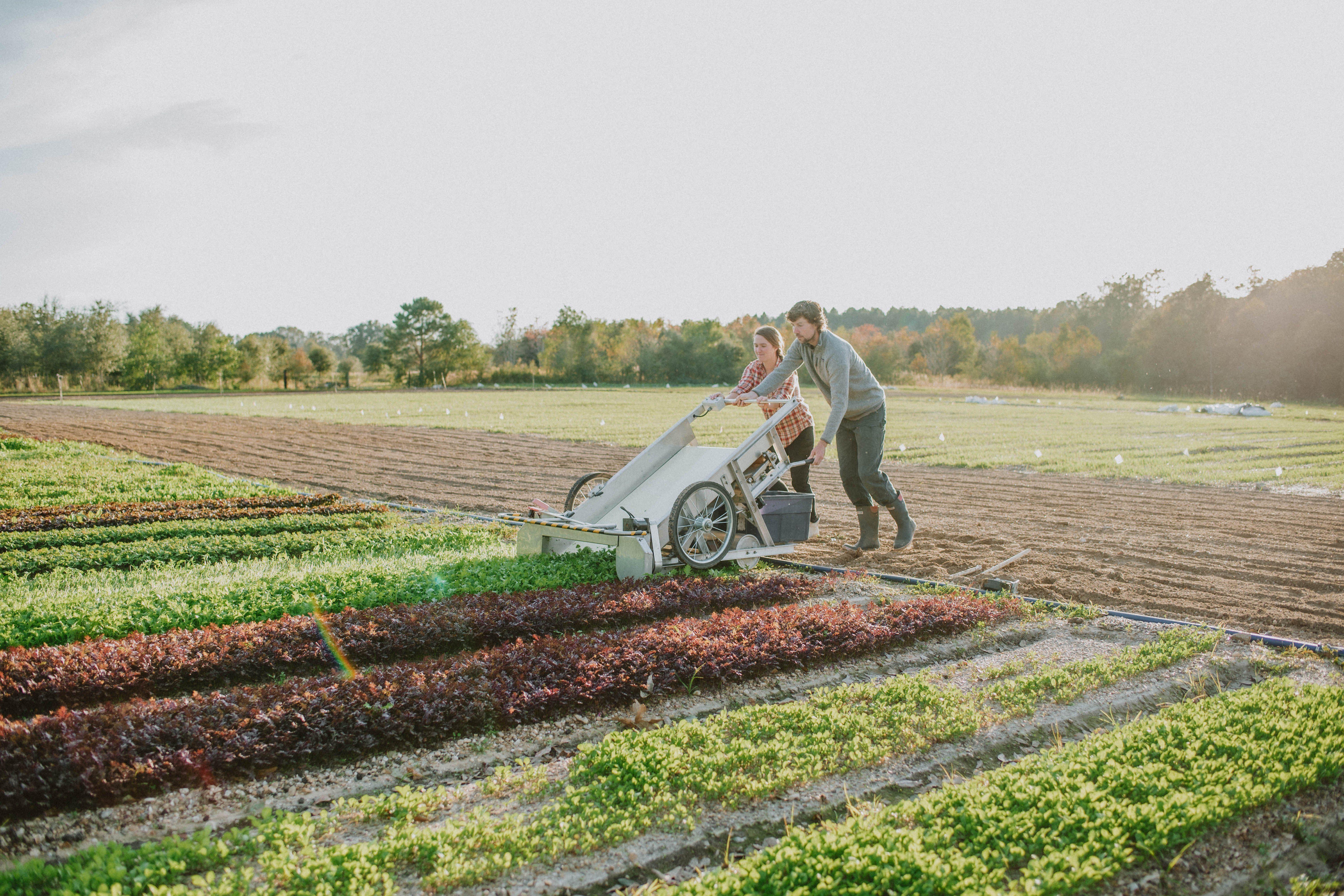 Harvie Farms New Orleans Week 8