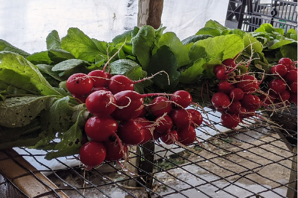 Farm Happenings for March 5, 2021