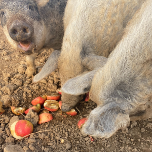 Farm Happenings for Week of  March 15, 2021