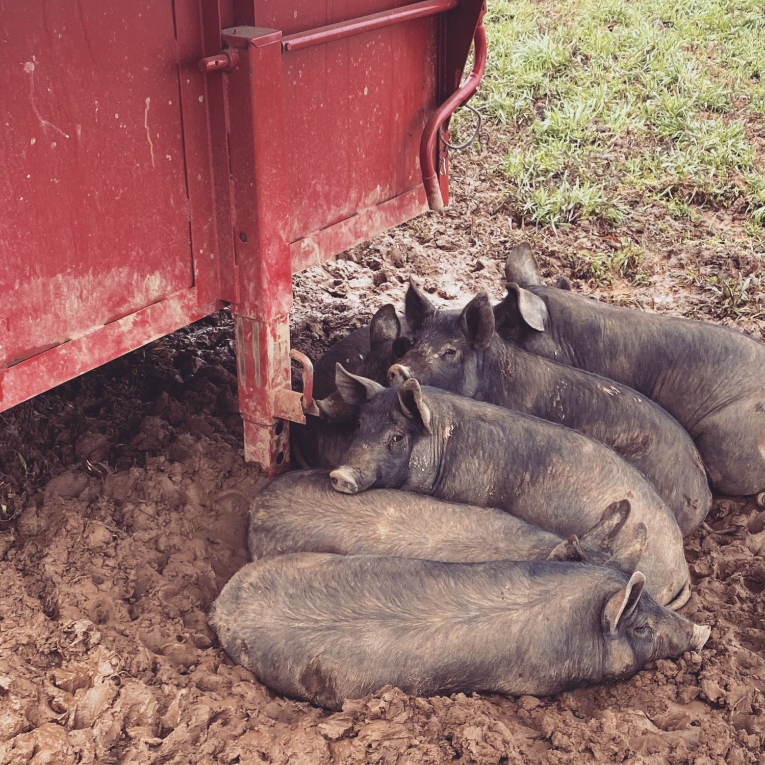Farm Happenings for Week of March 29, 2021