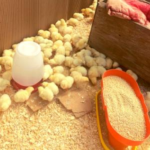 Farm Happenings for Week of April 5, 2021