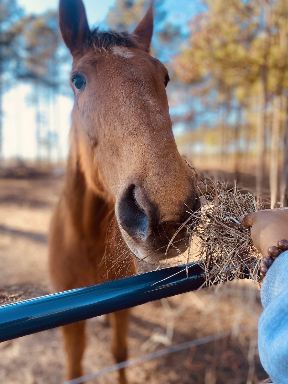 Our Farm Friends - Meet Reshone