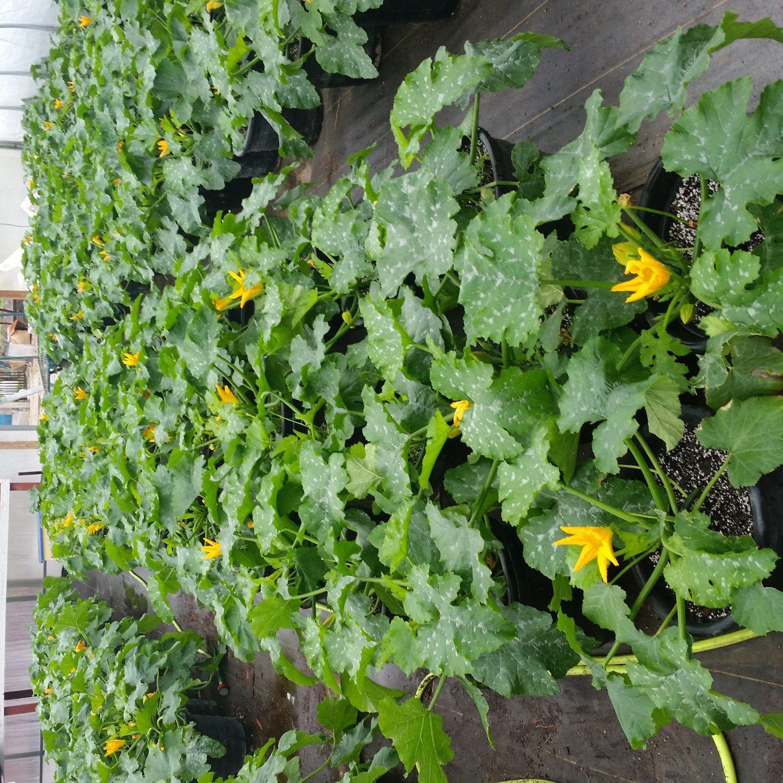 Grab RPfarm fresh produce at our Pop-Up Farm Stand