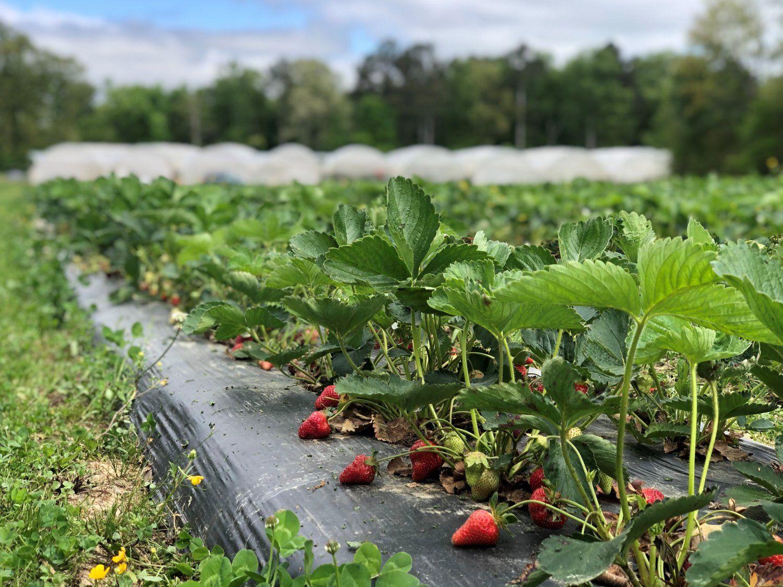 Farm Happenings for April 26th Week