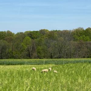 Farm Happenings for Week of May 5, 2021
