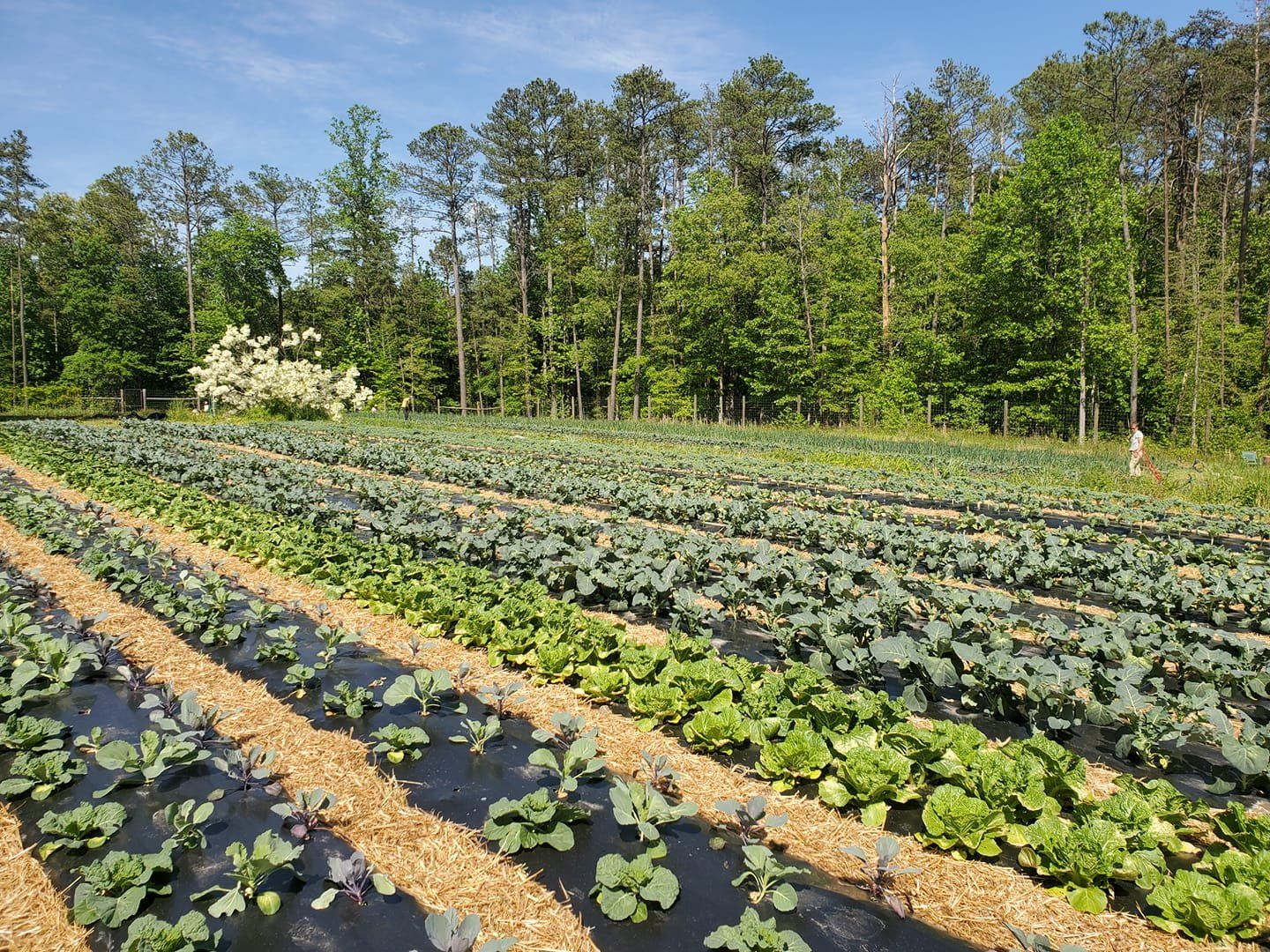 Next Happening: Farm Happenings for May 12, 2021