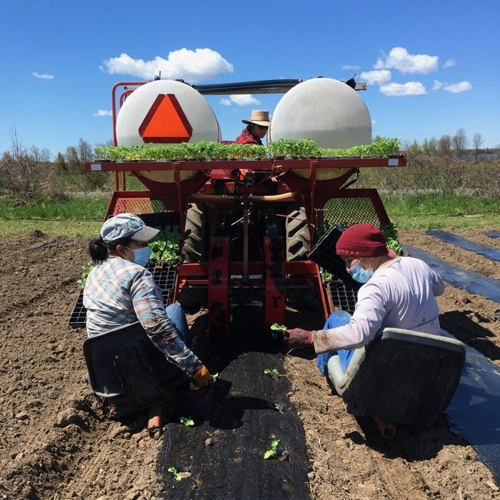 Previous Happening: Field planting time