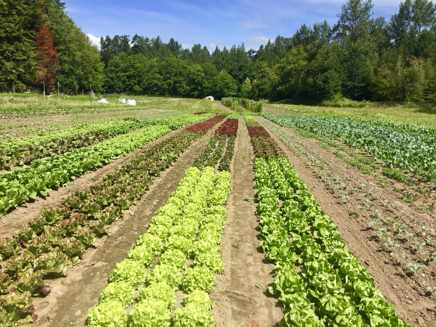 Farm Happenings for May 19, 2021