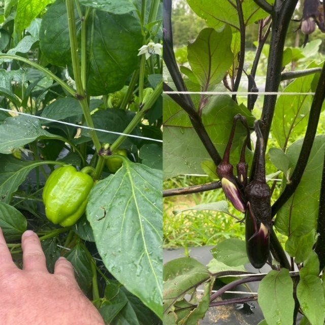 Farm Happenings for May 20, 2021