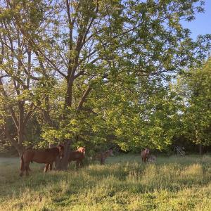 Farm Happenings for Week of May 24, 2021