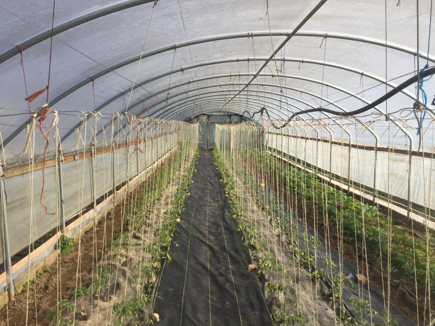 Farm Happenings for May 26, 2021